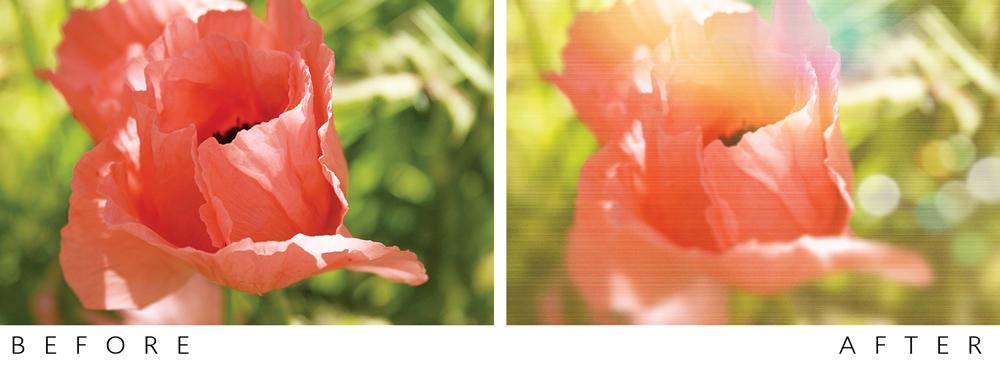 flowers-rhonna-app