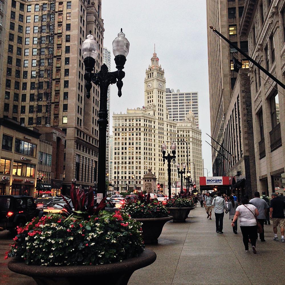 chicago city street web